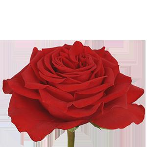 Роза Андерковер