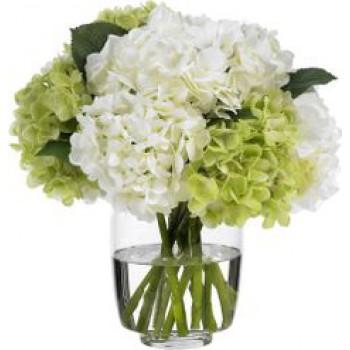 Гортензии в вазе