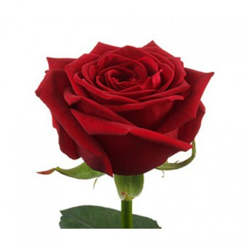Собери свой букет роз! (розы 60 см.)