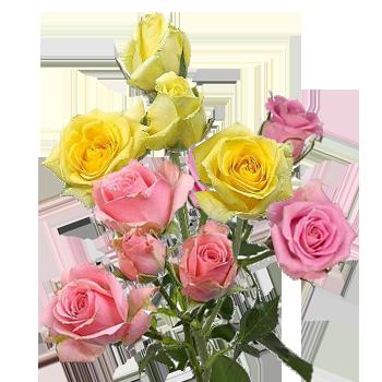 Роза кустовая микс