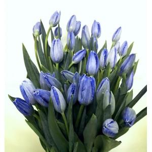 """""""Синие тюльпаны"""""""