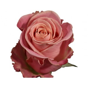Роза Хермоза
