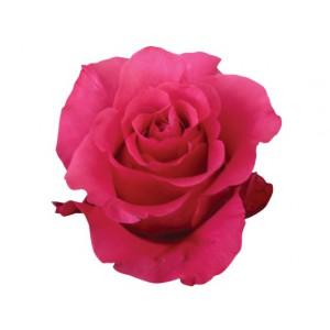 Роза Жанейро